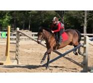 100% Equitation Haras De Val-En-Pré/15 jours